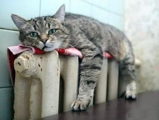 cat on a radiator relaxing