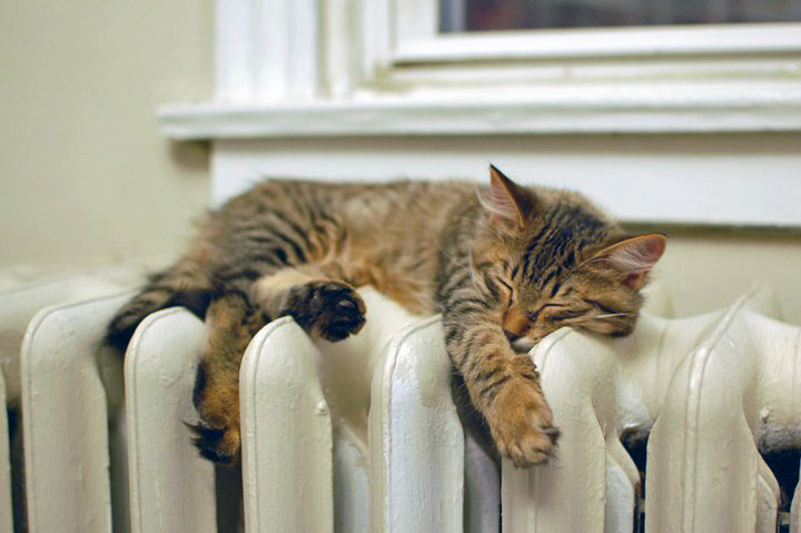 Comfy cat on a radiator