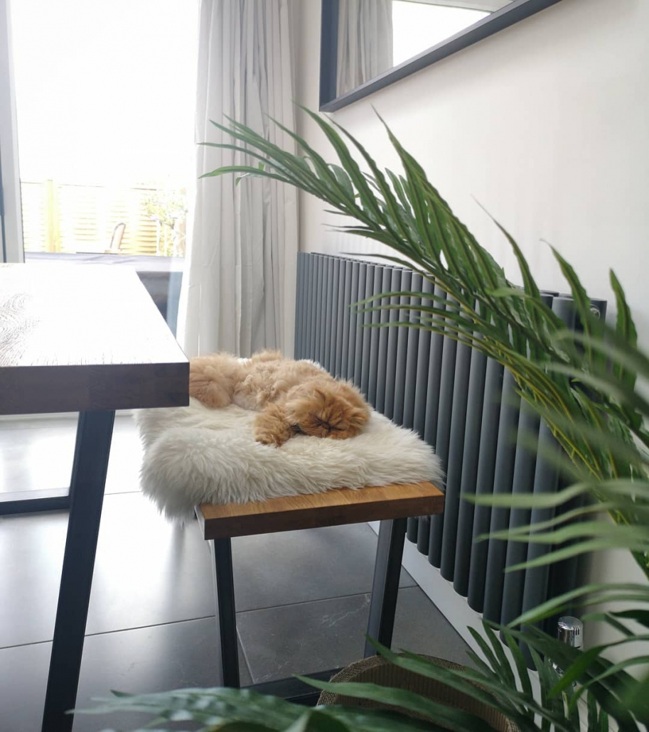 two persian cats asleep in front of an Aruba radiator