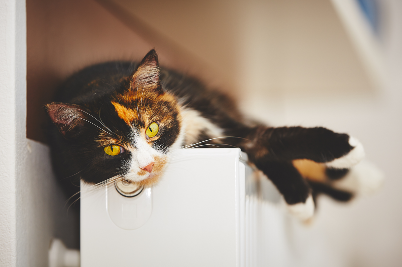 a cat lying comfortably on a radiator